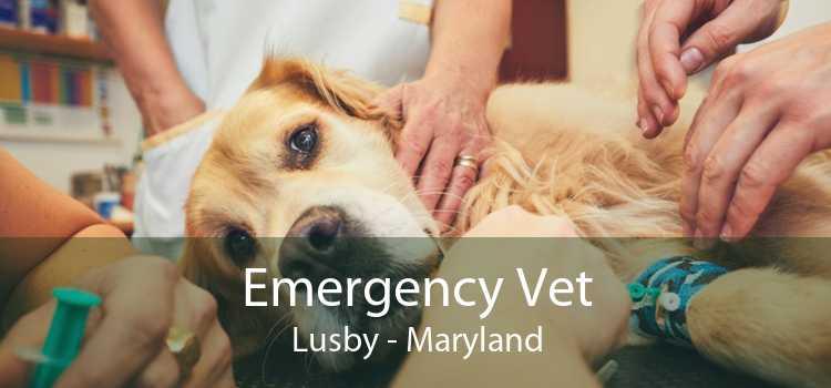Emergency Vet Lusby - Maryland