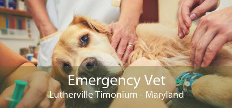Emergency Vet Lutherville Timonium - Maryland