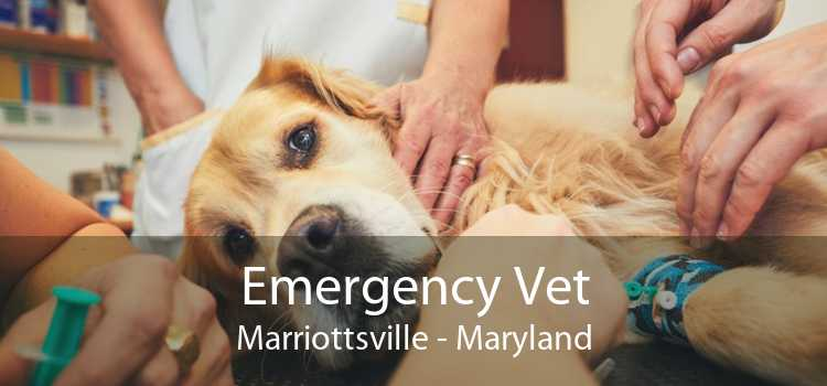 Emergency Vet Marriottsville - Maryland
