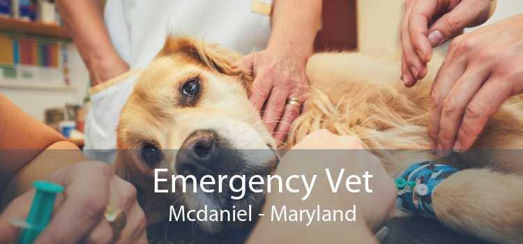 Emergency Vet Mcdaniel - Maryland