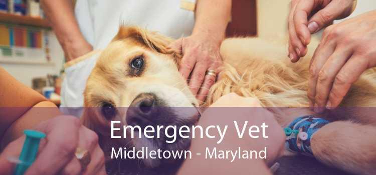 Emergency Vet Middletown - Maryland