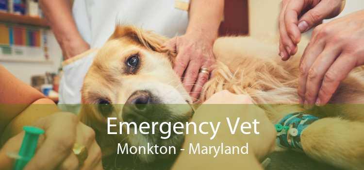 Emergency Vet Monkton - Maryland