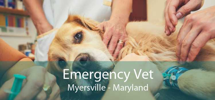 Emergency Vet Myersville - Maryland