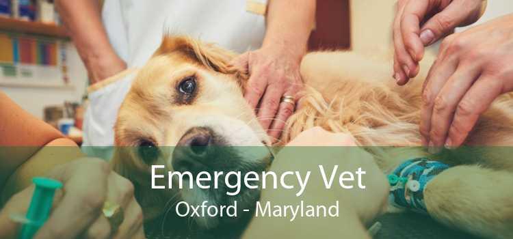 Emergency Vet Oxford - Maryland