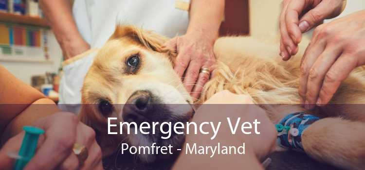Emergency Vet Pomfret - Maryland