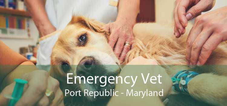 Emergency Vet Port Republic - Maryland