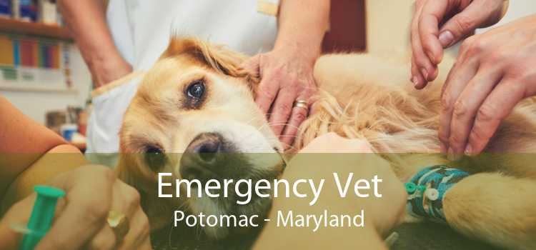 Emergency Vet Potomac - Maryland
