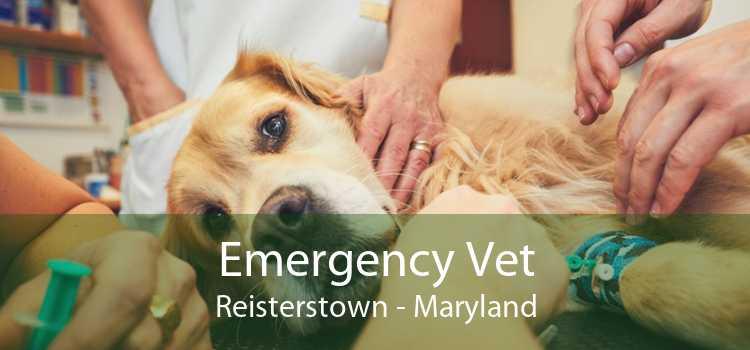Emergency Vet Reisterstown - Maryland