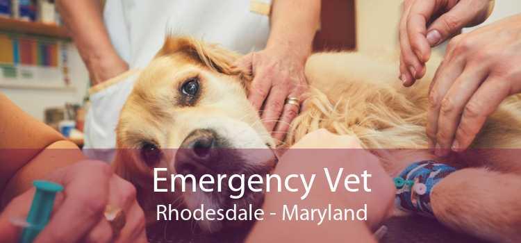 Emergency Vet Rhodesdale - Maryland