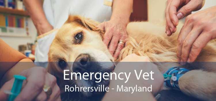 Emergency Vet Rohrersville - Maryland