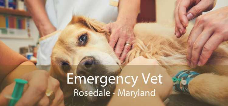 Emergency Vet Rosedale - Maryland