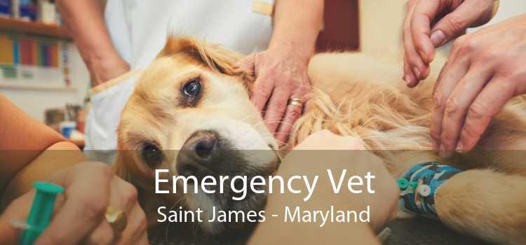 Emergency Vet Saint James - Maryland