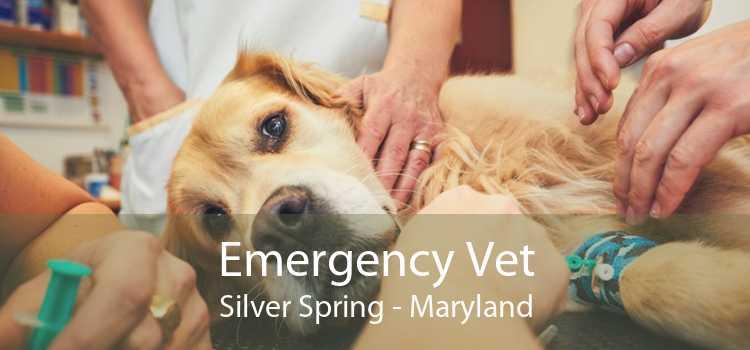 Emergency Vet Silver Spring - Maryland