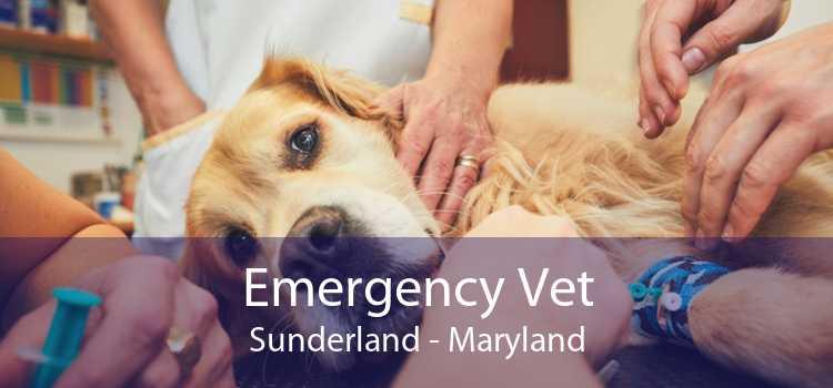 Emergency Vet Sunderland - Maryland