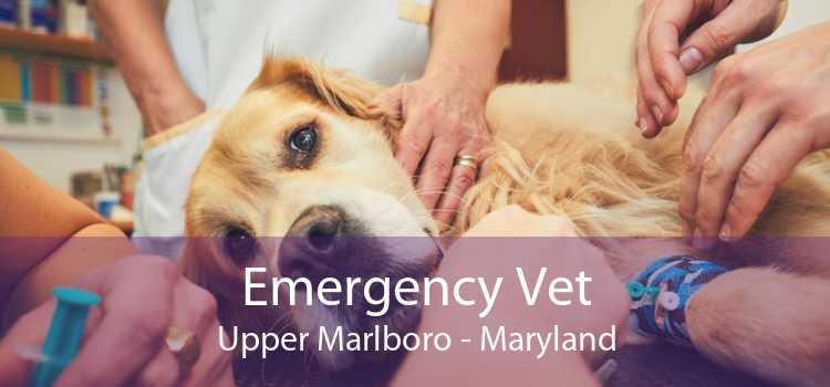 Emergency Vet Upper Marlboro - Maryland