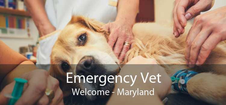 Emergency Vet Welcome - Maryland