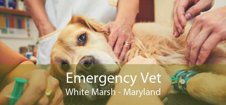 Emergency Vet White Marsh - Maryland