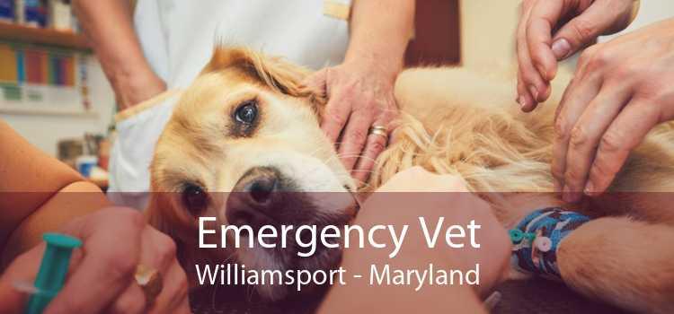 Emergency Vet Williamsport - Maryland
