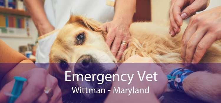 Emergency Vet Wittman - Maryland