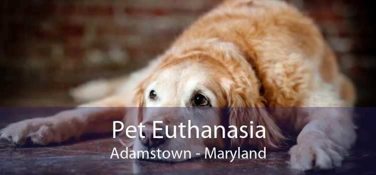 Pet Euthanasia Adamstown - Maryland
