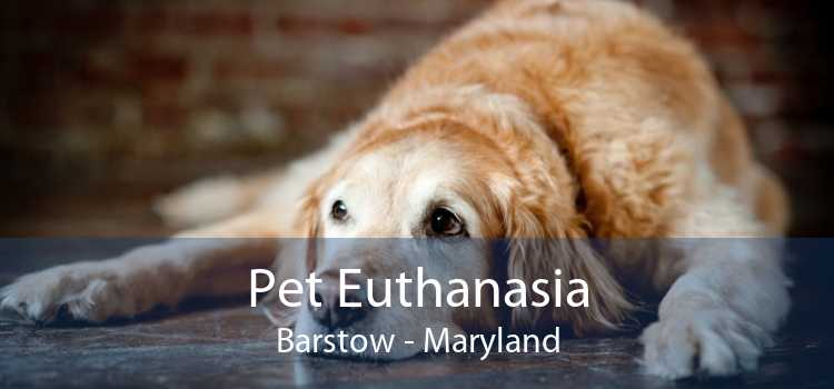 Pet Euthanasia Barstow - Maryland