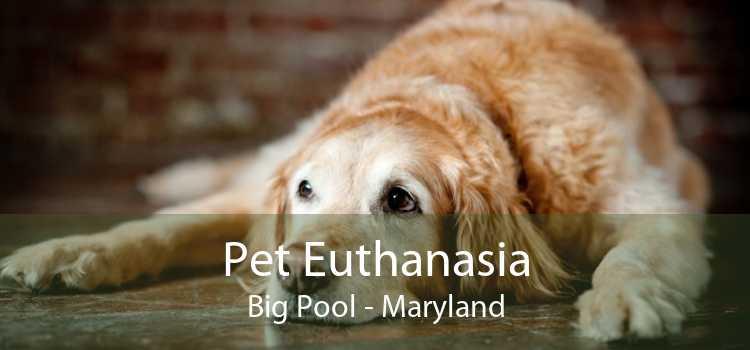 Pet Euthanasia Big Pool - Maryland