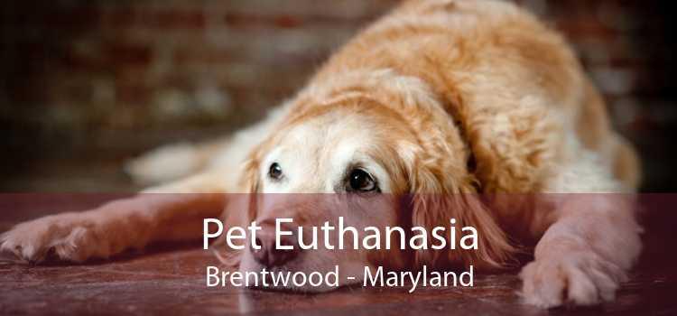 Pet Euthanasia Brentwood - Maryland