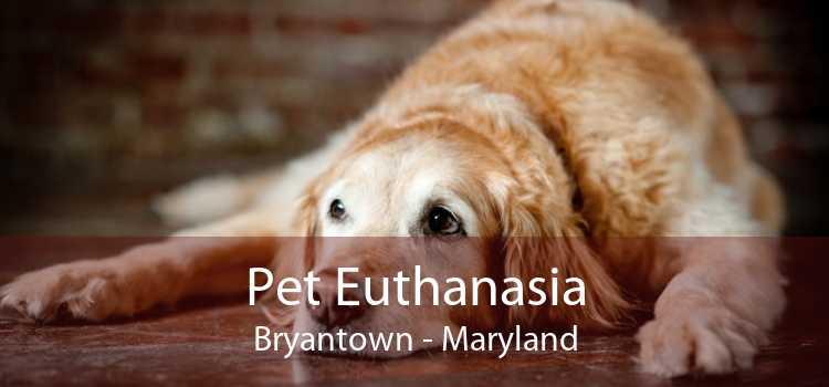 Pet Euthanasia Bryantown - Maryland