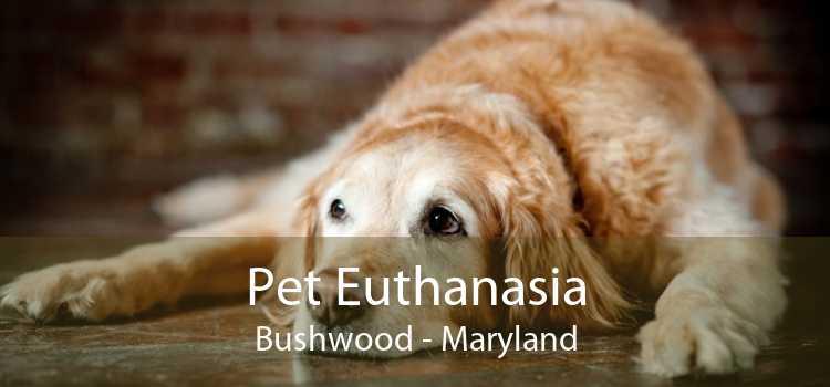 Pet Euthanasia Bushwood - Maryland