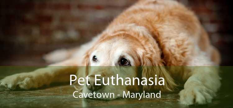Pet Euthanasia Cavetown - Maryland