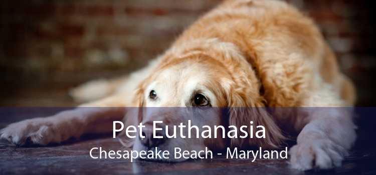 Pet Euthanasia Chesapeake Beach - Maryland