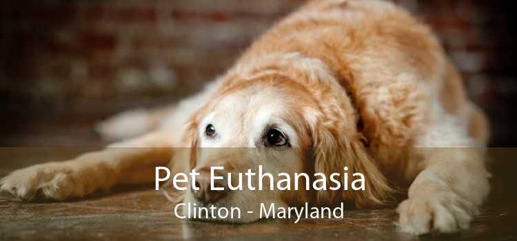Pet Euthanasia Clinton - Maryland