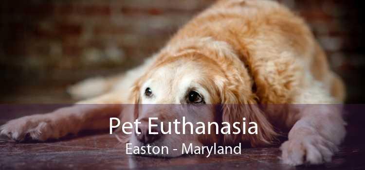 Pet Euthanasia Easton - Maryland