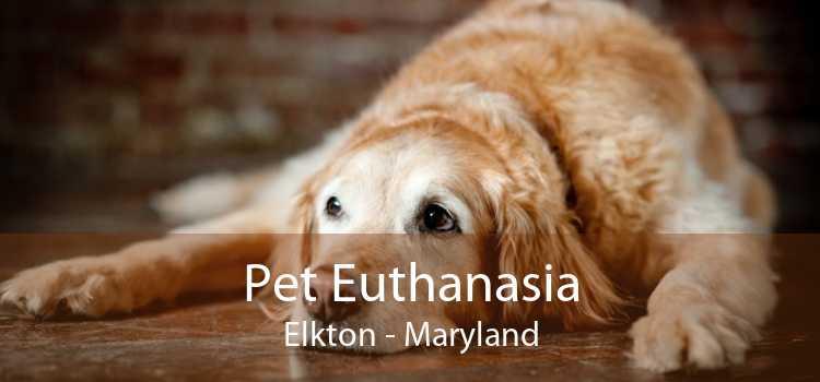 Pet Euthanasia Elkton - Maryland