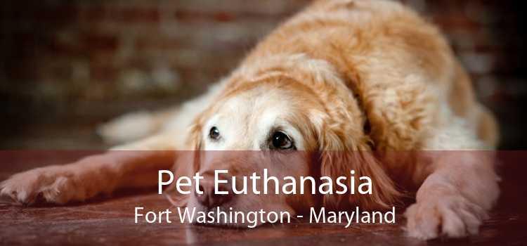 Pet Euthanasia Fort Washington - Maryland