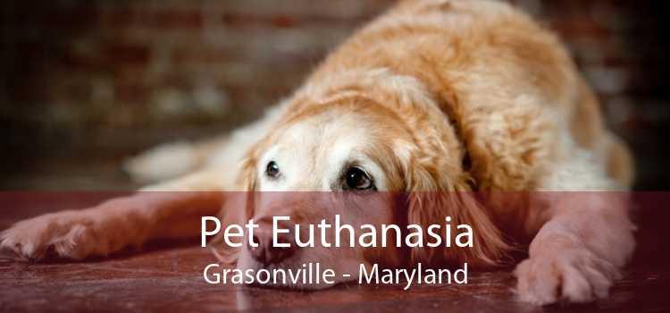 Pet Euthanasia Grasonville - Maryland