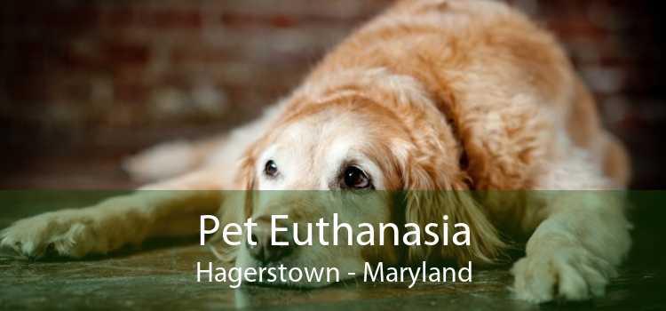 Pet Euthanasia Hagerstown - Maryland