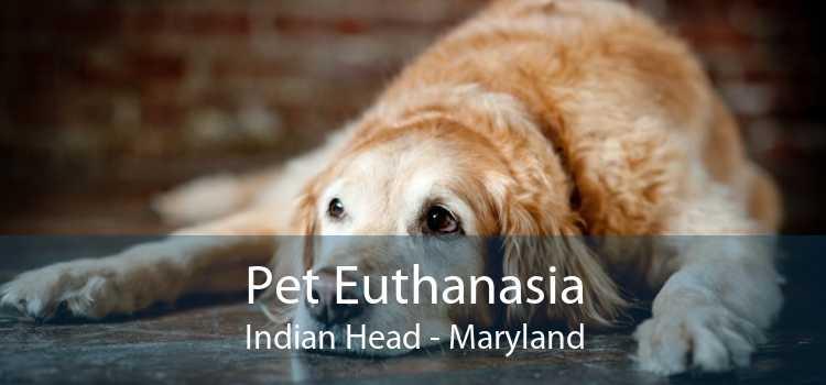 Pet Euthanasia Indian Head - Maryland