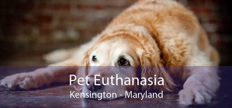 Pet Euthanasia Kensington - Maryland