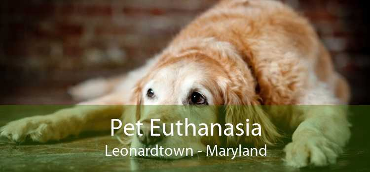 Pet Euthanasia Leonardtown - Maryland