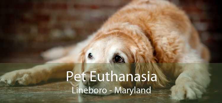 Pet Euthanasia Lineboro - Maryland