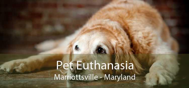 Pet Euthanasia Marriottsville - Maryland