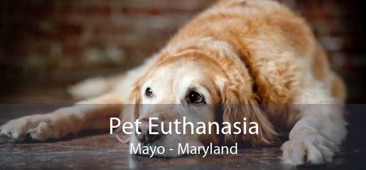 Pet Euthanasia Mayo - Maryland