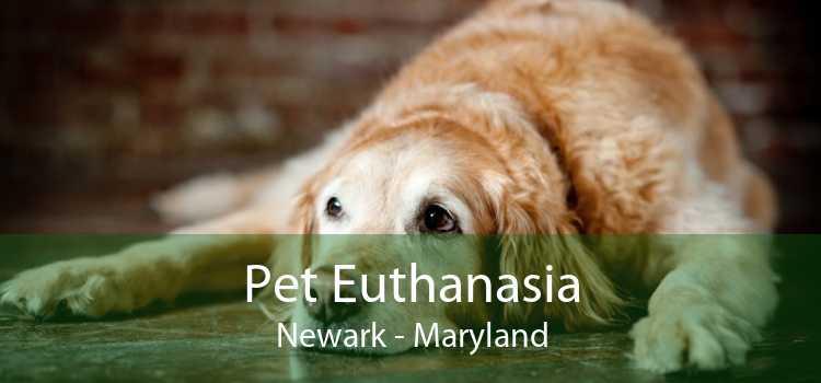Pet Euthanasia Newark - Maryland