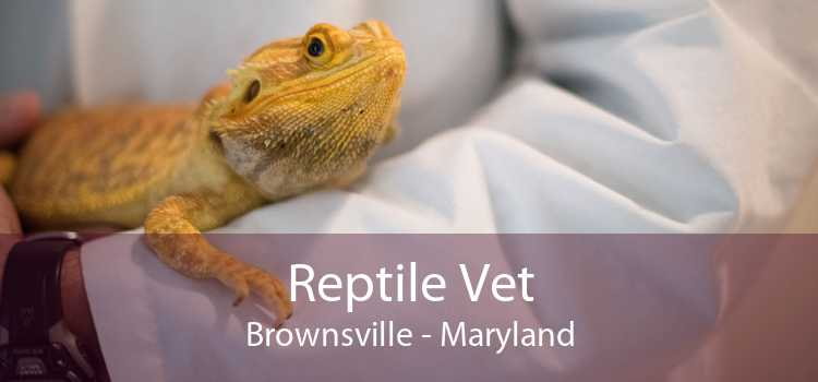 Reptile Vet Brownsville - Maryland