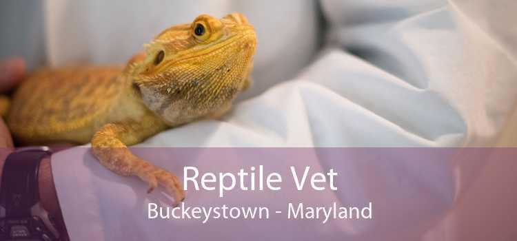 Reptile Vet Buckeystown - Maryland