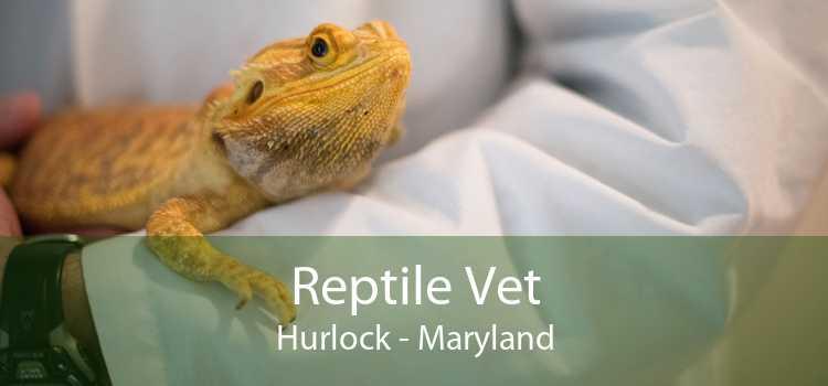Reptile Vet Hurlock - Maryland