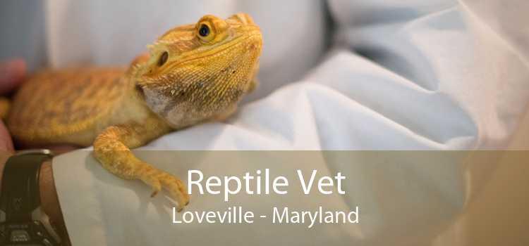 Reptile Vet Loveville - Maryland