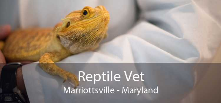 Reptile Vet Marriottsville - Maryland