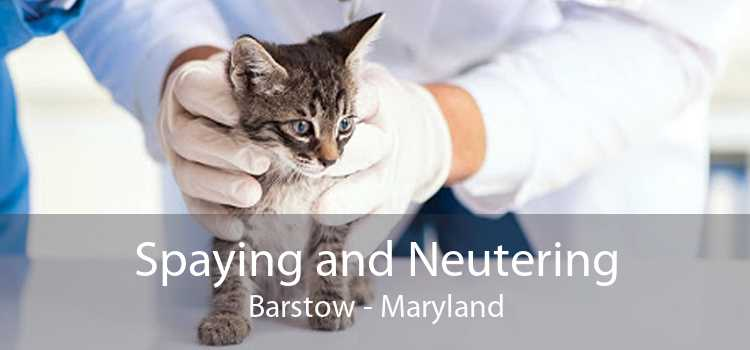 Spaying and Neutering Barstow - Maryland